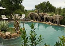 Impodimo Game Lodge pool