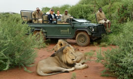 Impodimo Game drive in Madikwe