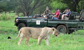 Mabula Game Drive