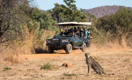 Lion sighting on a game drive at Mabula