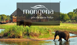 Elephants in front of Mongena
