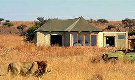 Lion in front of Ndaka Lodge