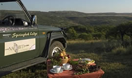 Nambiti Springbok Lodge Game Drive